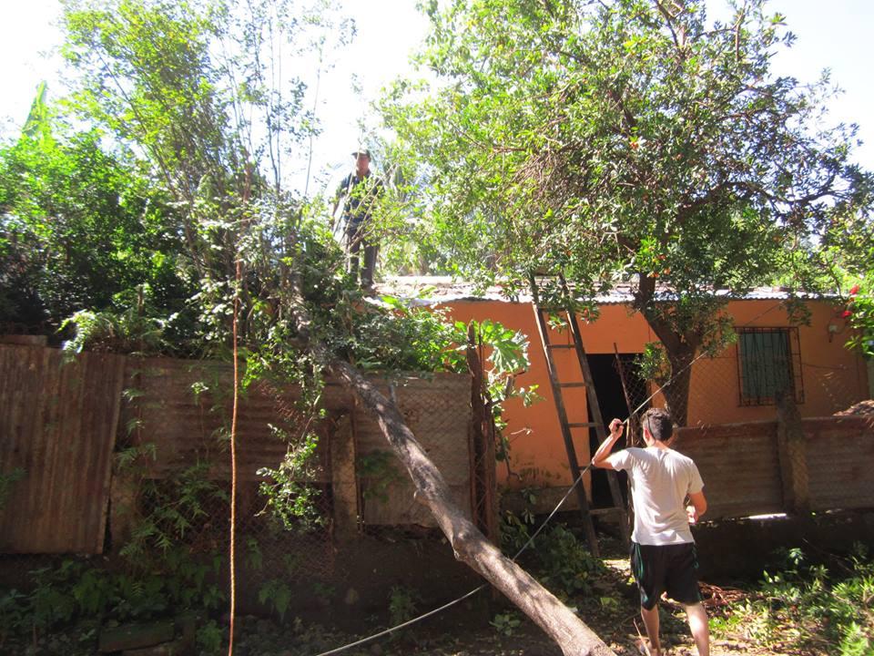 Trabajos de Remoción de un Árbol Caído